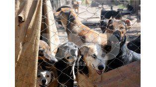 Solos. Los 75 animales que permanecen en el predio esperan ser adoptados