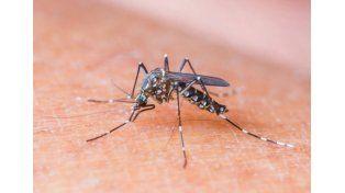Confirman que el primer caso autóctono de zika del país fue por transmisión sexual