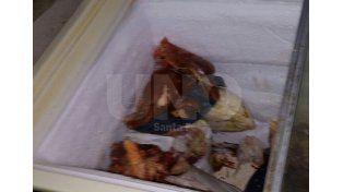 San Jorge: secuestraron animales robados y faenados clandestinamente