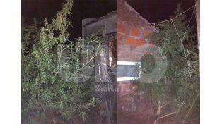 Alguna de las plantas secuestradas en la vivienda de los ladrones.