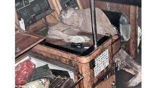 Hallaron un cuerpo momificado en un barco junto a una conmovedora carta de amor