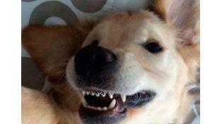 Conocé a Wesley, el perro que usa brackets y es muy feliz