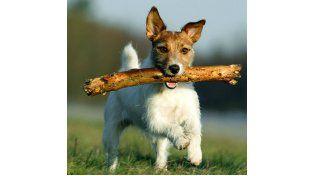 El tradicional juego de tirarle un palo a los perros para lo vayan a buscar es muy peligroso.