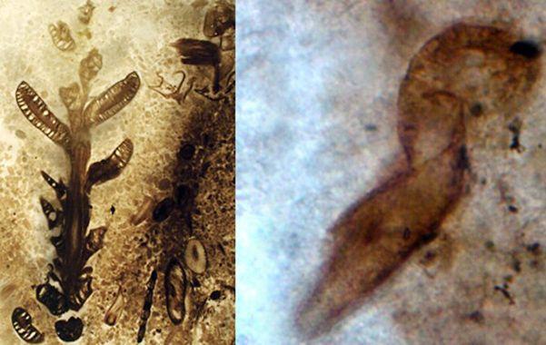 Asombroso. Los investigadores hallaron plantas y raros microorganismos.
