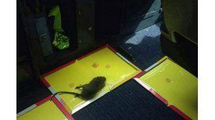 Se sospecha que la rata iba en alguna de las furgonetas que llevan la comida para los pasajeros.
