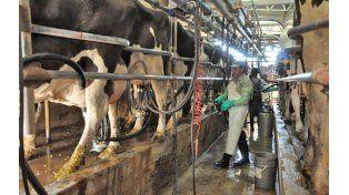 La leche también sufrió una caída del precio a nivel internacional.