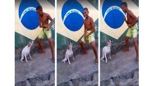 Furor por el perro que baila samba en las calles de Brasilia