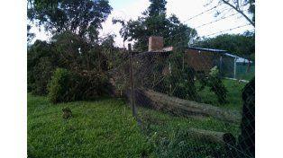 Sauce Viejo. Los vecinos reclaman la poda de árboles a la comuna.