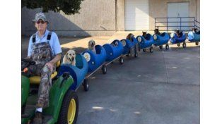 Construyó un tren para pasear perros abandonados