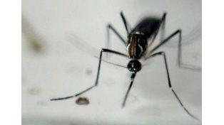 Brasil quiere esterilizar a los mosquitos para luchar contra el zika