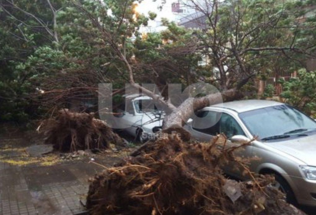 Más de 8.000 toneladas de árboles y ramas serán removidas en la ciudad