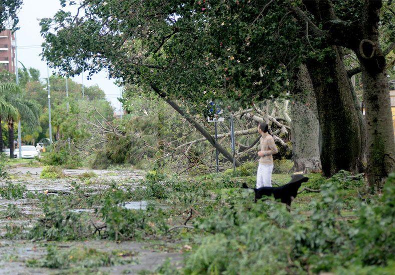 """""""Hay más de 1.600 cuadras bloqueadas por la caída de árboles"""