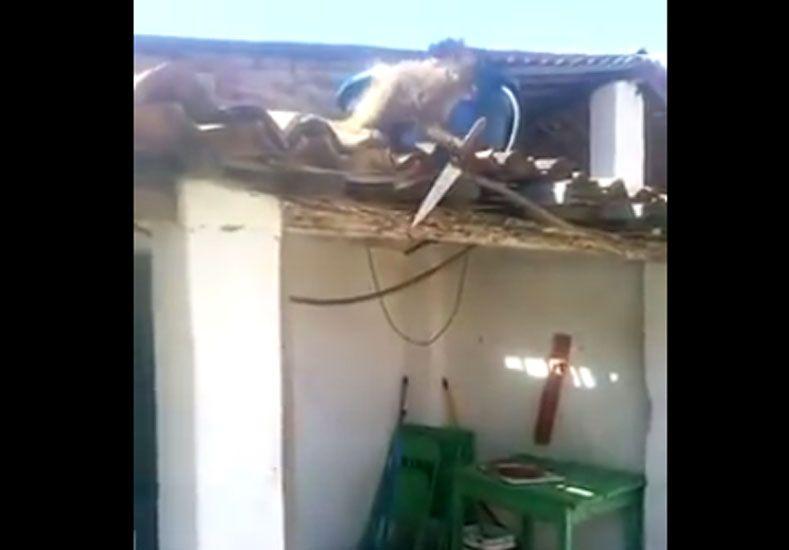 Un mono armado y borracho causó pánico en Brasil
