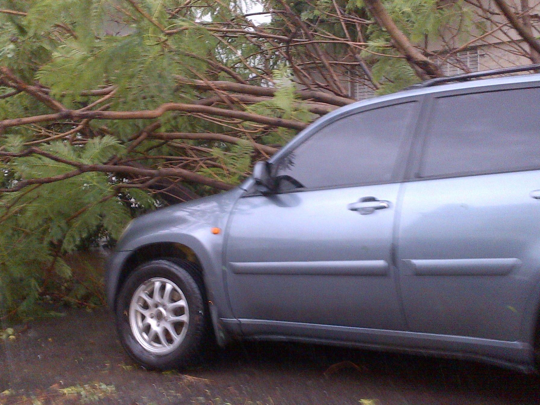 La imagen de árboles caídos se replicó en numerosas localidades de la provincia.