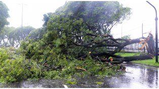 Un árbol añoso cedió  por el viento en Seguí al 5.300 y mató a un hombre que circulaba por le lugar.