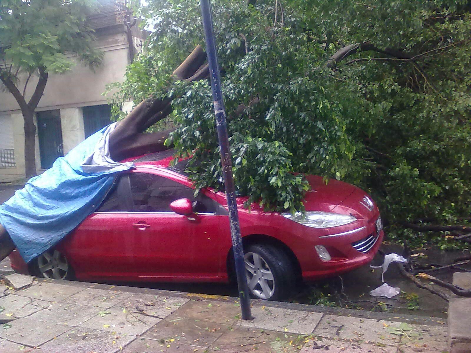Un árbol cayó sobre un auto en 9 de julio al 3100. Gentileza Benjamín Alvarez.