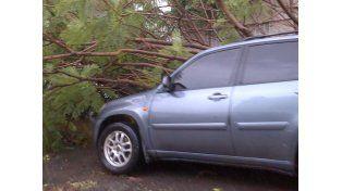 Otro árbol cayó sobre un auto en Candioti y Alberdi. Gentileza Alejo Martínez.