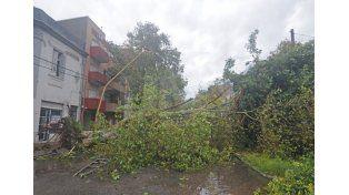 Muchos árboles de gran tamaño cayeron por los fuertes vientos en la mañana de este viernes
