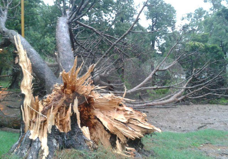 Árbol caído en el Parque Garay. Fotro: Manuel Testi / Diario UNO Santa Fe