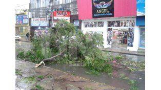 Árbol caído en calle Mendoza. Fotro: Manuel Testi / Diario UNO Santa Fe