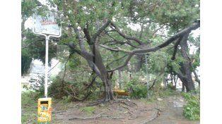 Árbol caído en Plaza del Soldado. Fotro: Manuel Testi / Diario UNO Santa Fe