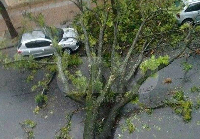 Tanya envió esta foto de Avellaneda y Balcarce. Otro árbol caído.