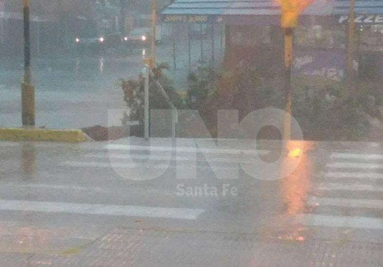 Ana María Verón envió una foto de un árbol caído frente  ala terminal de ómnibus.