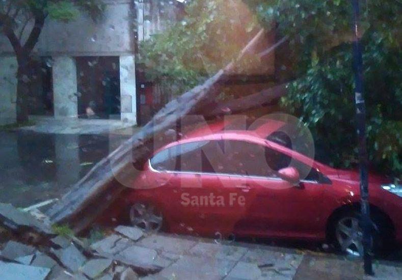 Un árbol cayó arriba de un auto y lo abolló en  Debora Saavedra Alegre 19 de febrero de 2016 9:53 9 de Julio