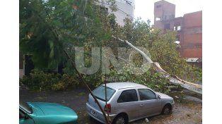 Caída de un árbol añejo sobre Castellanos al 2.200./ gentileza lectores UNO.