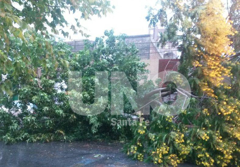 Un árbol cayó arriba de dos autos en Saavedra al 2200. Foto gentileza: Pablo