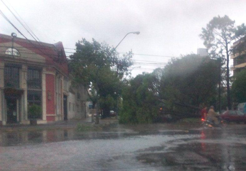 Árbol caído en cándido Pujato y 9 de Julio. Foto: Jose Ignacio