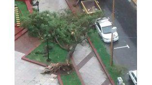 Así quedó la Plaza de Moreno y San Martín. Foto: Sol