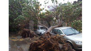 Árbol caído en Saavedra 2257 entre Mendoza y Salta. Foto: @julianherbalife