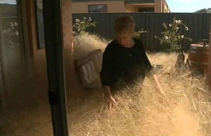 Los habitantes de un pequeño pueblo australiano viven aterrados por el pánico peludo
