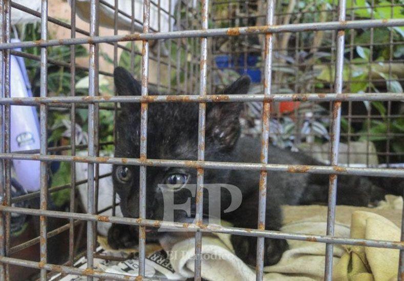 El gato rescatado./ Gentileza El Periódico.