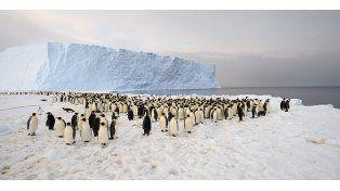 Los investigadores alertan del riesgo de que los pingüinos desaparezcan completamente del Cabo Denison en los próximos 20 años.