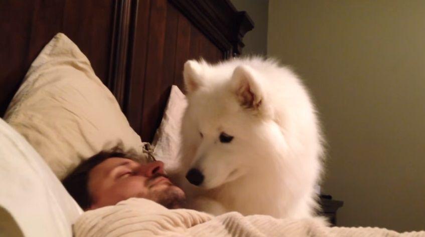 A falta de alarma, un perro despertador