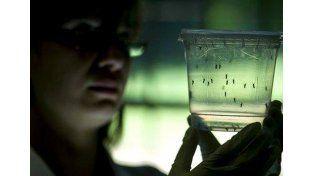La provincia recomienda que, después de la lluvia, se tomen medidas contra el dengue