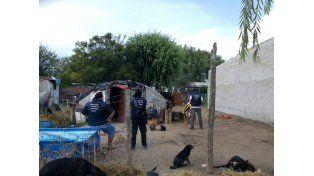 Villa Constitución: detuvieron a un hombre y secuestraron una planta de marihuana de dos metros de altura