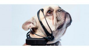 ¡Al fin! Inventan un dispositivo para saber qué quieren los perros