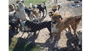 La Sociedad Protectora de Animales pide alimento balanceado