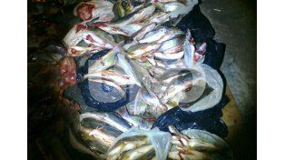 Secuestraron más de 400 kilos de pescado, redes, escopetas y cartuchos