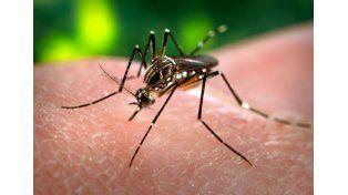 Detectaron el primer caso autóctono de dengue en la provincia