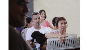 Tenencia responsable: realizaron más de 100 castraciones en La Tablada