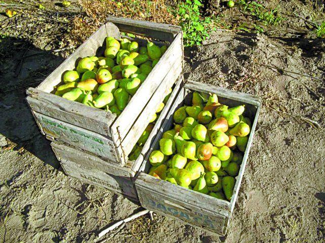 Publicó en Facebook que regalaba frutas y le vaciaron las plantas