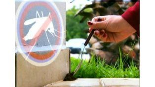 Recomiendan la borra de café para combatir el dengue