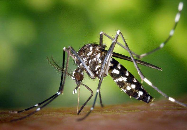 Recomiendan que las embarazadas no viajen donde hay Zika