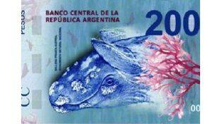Un error en la ballena del nuevo billete despertó polémica en Puerto Madryn