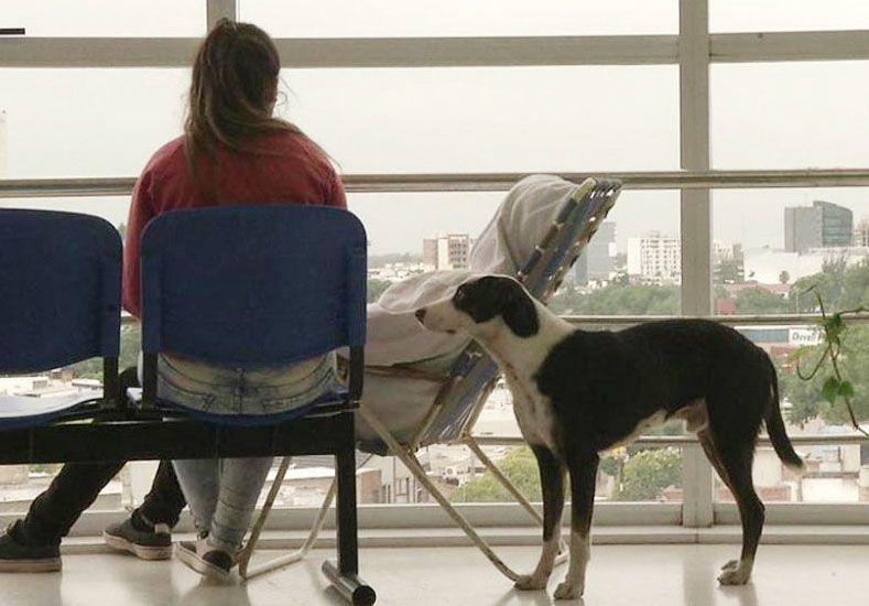 Pirata, el perro que busca a su dueño muerto en el hospital