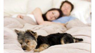Dormir con la mascota